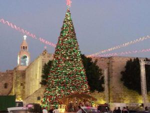 Tree in Bethlehem. Photo courtesy Wikipedia.